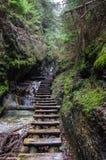 Wandelingssleep over rivier in Slowaaks Paradijs Nationaal Park, Slo stock foto's