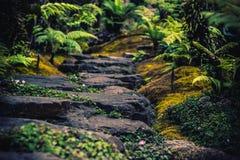 Wandelingsslepen die tropische bossenreis simuleren stock afbeeldingen