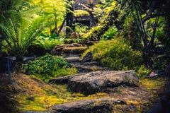 Wandelingsslepen die tropische bossenreis simuleren stock foto