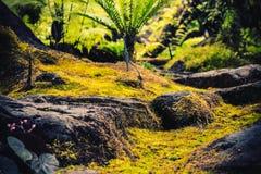 Wandelingsslepen die tropische bossenreis simuleren stock afbeelding