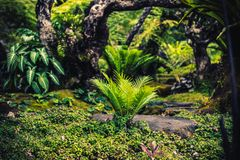 Wandelingsslepen die tropische bossenreis simuleren royalty-vrije stock afbeeldingen