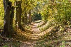 Wandelingsslepen door het hout Stock Fotografie