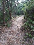 Wandelingsspoor in Taman Neagara Maleisië stock afbeelding