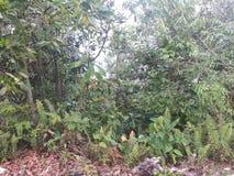 Wandelingsspoor in Taman Neagara Maleisië stock foto's