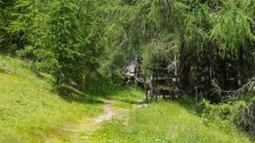 Wandelingsweg allen behandeld met groen gras Royalty-vrije Stock Afbeelding