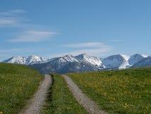 Wandelingsweg in alpien landschap met weide en alpen in Beieren royalty-vrije stock fotografie