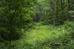 Wandelingsweg door dicht bos stock afbeelding