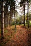 Wandelingsweg in het bos van Minnesota royalty-vrije stock afbeelding