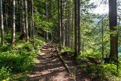 Wandelingsweg in het mooie bos van Zwart Meer royalty-vrije stock foto