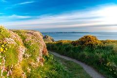 Wandelingsweg met bloemen en blauwe Hemelachtergrond in Cornwall, Engeland, het UK stock fotografie