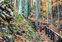Wandelingsweg met traliewerk in het de herfst vergankelijke bos Stock Afbeeldingen