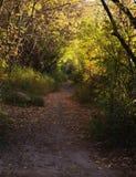 Wandelingsweg in ochtend stock fotografie