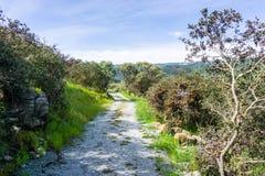 Wandelingsweg op de heuvels van de onlangs geopende Rancho San Vicente Open Space Preserve, een deel van Calero-het Park van de P royalty-vrije stock fotografie
