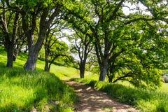 Wandelingsweg op de heuvels van de onlangs geopende Rancho San Vicente Open Space Preserve, een deel van Calero-het Park van de P royalty-vrije stock afbeelding