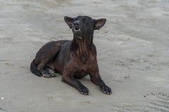 Wanderer бездомной собаки Стоковые Фото