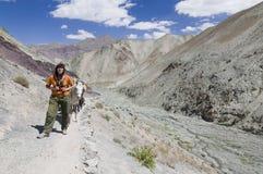 Wanderer atemlos mit Maultiere behund Stockfotografie