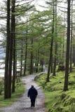 Wanderer auf Fußweg durch Bäume durch Buttermere lizenzfreies stockbild