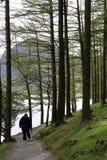 Wanderer auf Fußweg durch Bäume durch Buttermere stockbild