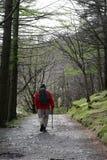 Wanderer auf Fußweg durch Bäume durch Buttermere lizenzfreie stockbilder