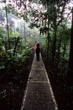 Wanderer auf hängender Brücke Lizenzfreies Stockbild