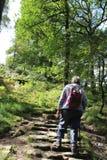 Wanderer auf Schritten, Fußweg durch Waldlichtung Lizenzfreie Stockfotos
