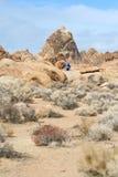 Wanderer in den einzigen Kiefern Stockfotografie