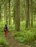 Wanderer, der entlang einem Waldpfad pausiert Lizenzfreie Stockfotos