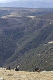 Wanderer, die auf dem Berg mit ihren Hunden sitzen Lizenzfreies Stockfoto