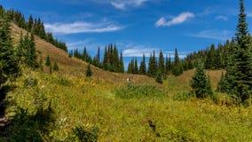 Wanderer, die einer Spur durch die Alpenwiesen folgen Stockbilder