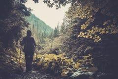 Wanderer in einem Wald Stockfotos