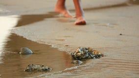 Wanderer-Füße auf einem Strand mit Felsen-Pools stock footage