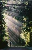 Wanderer geht in Wald voran Stockfotografie