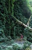 Wanderer im Holz Stockfotografie