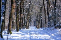 Wanderer im niederländischen schneebedeckten Holz, Loenermark Stockbild