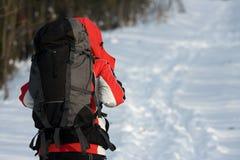 Wanderer im Wald Stockbild