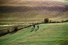 Wanderer mit Hunden Lizenzfreies Stockfoto