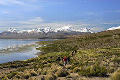 Wanderer in See Chungara Lauca im Nationalpark stockbilder
