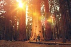 Wanderer vor riesigem Mammutbaum stockfoto
