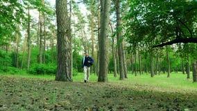 Wanderer wandert auf einem Weg durch einen Wald stock video