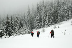 Wanderer in Winter Karpaten-Bergen ukraine Lizenzfreies Stockbild