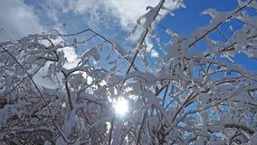 Wanderergesichtspunkt Nahaufnahmebeine mit den Schneeschuhen, die auf Schnee gehen, tauchen auf Snowshoeing auf frischem Schnee Stockfotos
