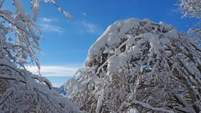 Wanderergesichtspunkt Nahaufnahmebeine mit den Schneeschuhen, die auf Schnee gehen, tauchen auf Snowshoeing auf frischem Schnee Stockfotografie