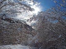 Wanderergesichtspunkt Nahaufnahmebeine mit den Schneeschuhen, die auf Schnee gehen, tauchen auf Snowshoeing auf frischem Schnee Stockbild