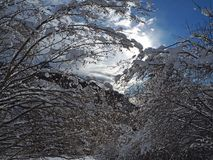 Wanderergesichtspunkt Nahaufnahmebeine mit den Schneeschuhen, die auf Schnee gehen, tauchen auf Snowshoeing auf frischem Schnee Lizenzfreie Stockbilder