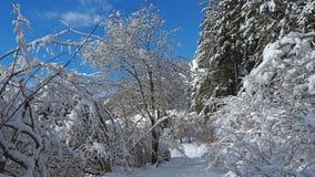 Wanderergesichtspunkt Nahaufnahmebeine mit den Schneeschuhen, die auf Schnee gehen, tauchen auf Snowshoeing auf frischem Schnee Stockbilder