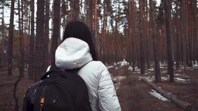 Wandererm?dchen mit Rucksack gehend in einen Kiefernwald, hintere Ansicht Aktiver Lebensstil und Abenteuer in der Natur der wild  stock video