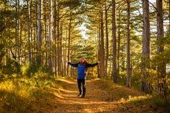 Wanderermannwege in einem Kieferngelbherbst-Waldwanderer genießt Falllandschaft Touristen verbreitet seine Hände und Rufe Stockbilder