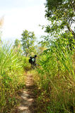 Wandererwandern Lizenzfreies Stockbild