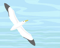 Wandering albatross. A hand drawn illustration of a wandering albatross gliding over the ocean Royalty Free Stock Image