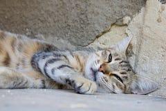 Wandering cat sleeps Royalty Free Stock Photo